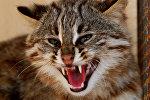 Далёкаўсходні дзікі лясны кот