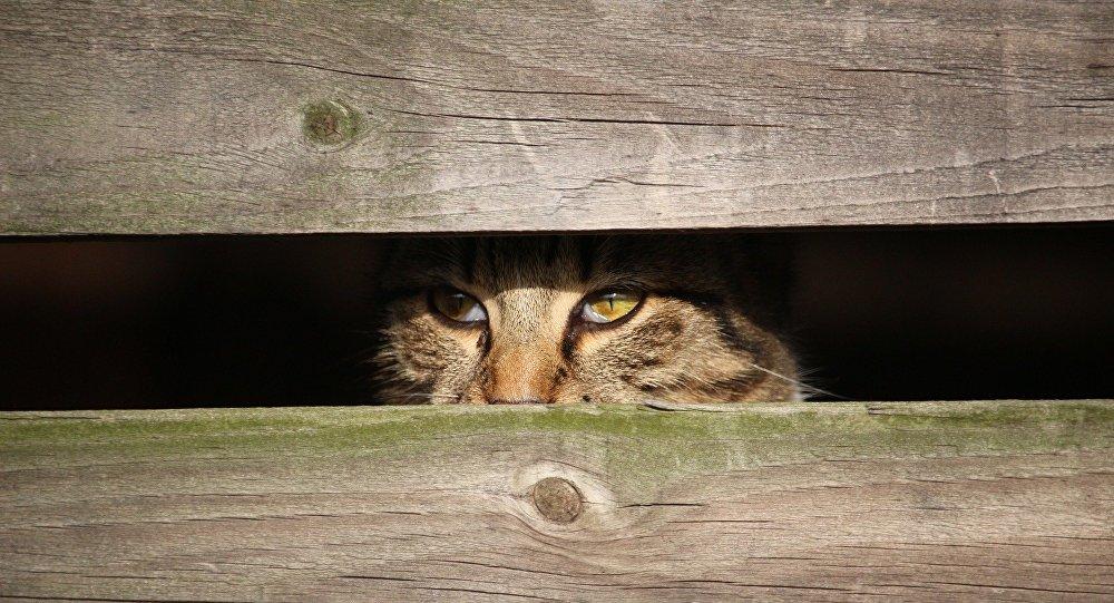 Побег кота Мартика ваэропорту Минск попал навидео