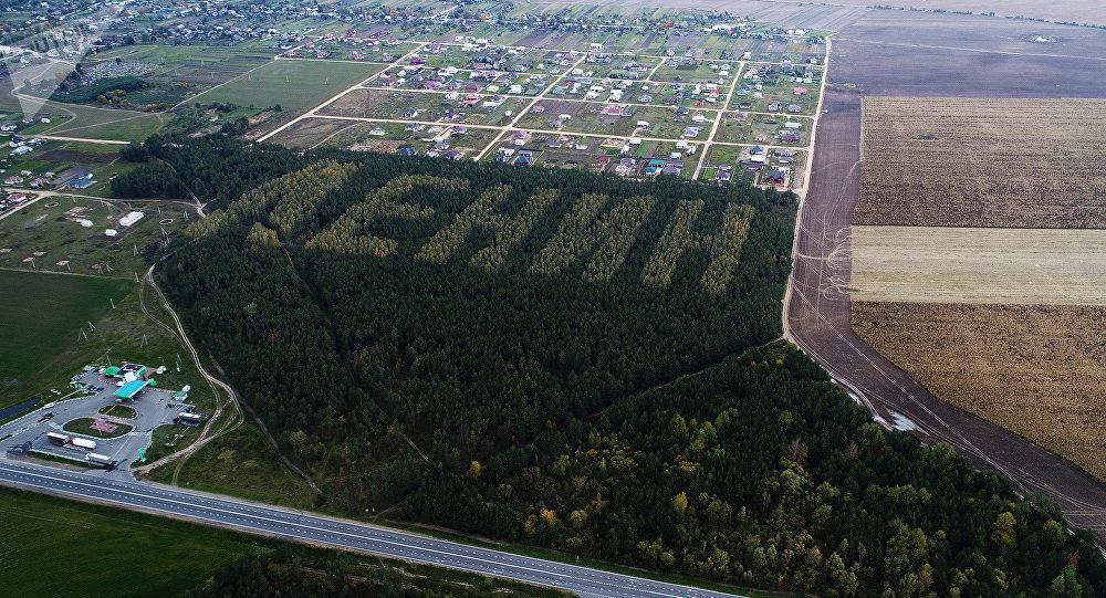 Лесной Ленин, высаженный из берез и сосен к 50-летию революции