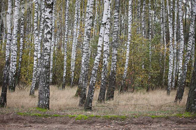 Надпись занимает около 26 гектаров, по  5 гектаров занимает каждая буква
