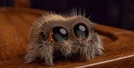 Американский аниматор нарисовал самого милого в мире паука