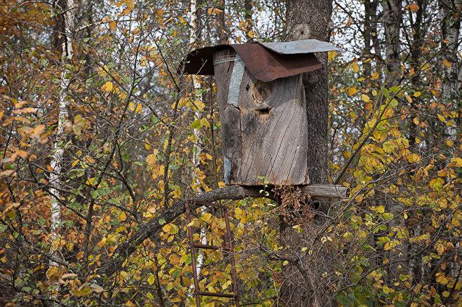 Бортный мед - колода в лесу