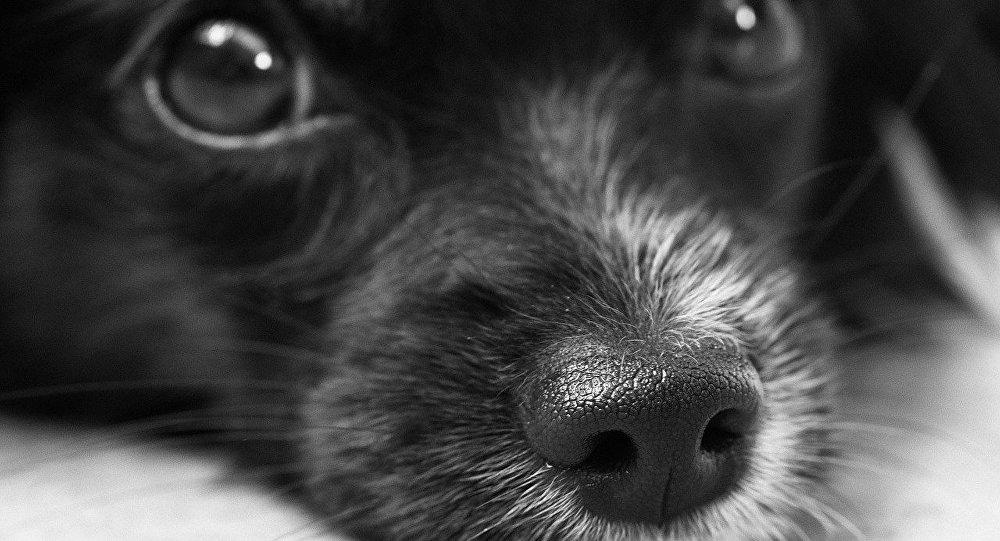 ВКрасноярске волонтеры просят помощи щенку, которого облили бензином иподожгли